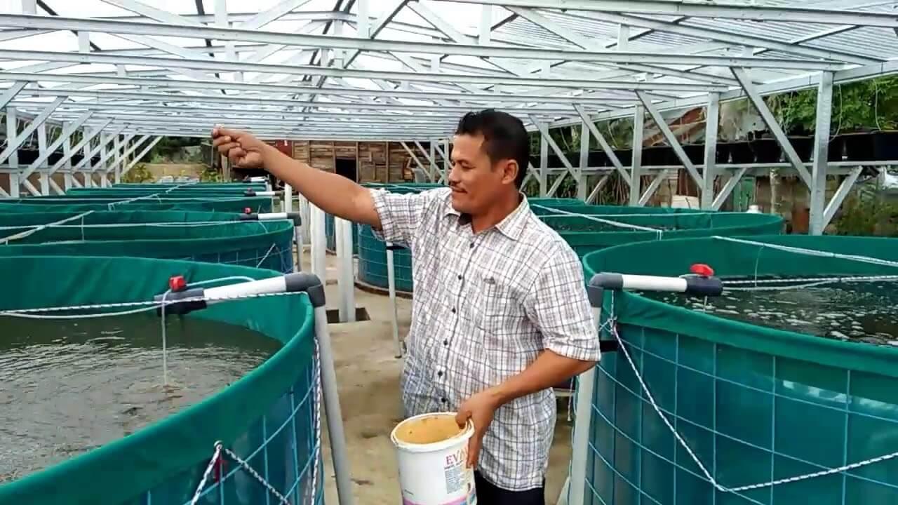Cara Budidaya Ikan Lele Bioflok untuk Pemula