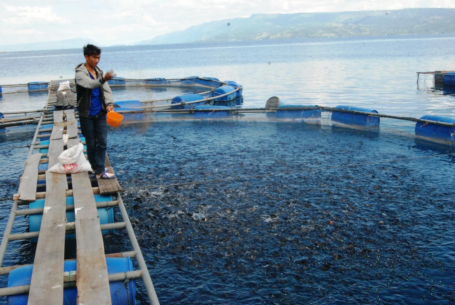 Apa Itu Sistem Budidaya Ikan Nila Bioflok?