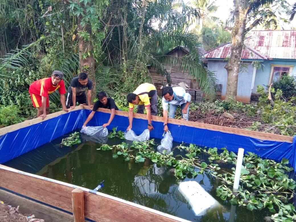 Persiapan Kolam Terpal Budidaya Ikan Lele