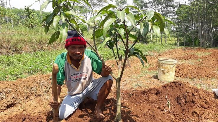 Alat dan Bahan yang Disiapkan Sebelum Menanam Pohon Mangga