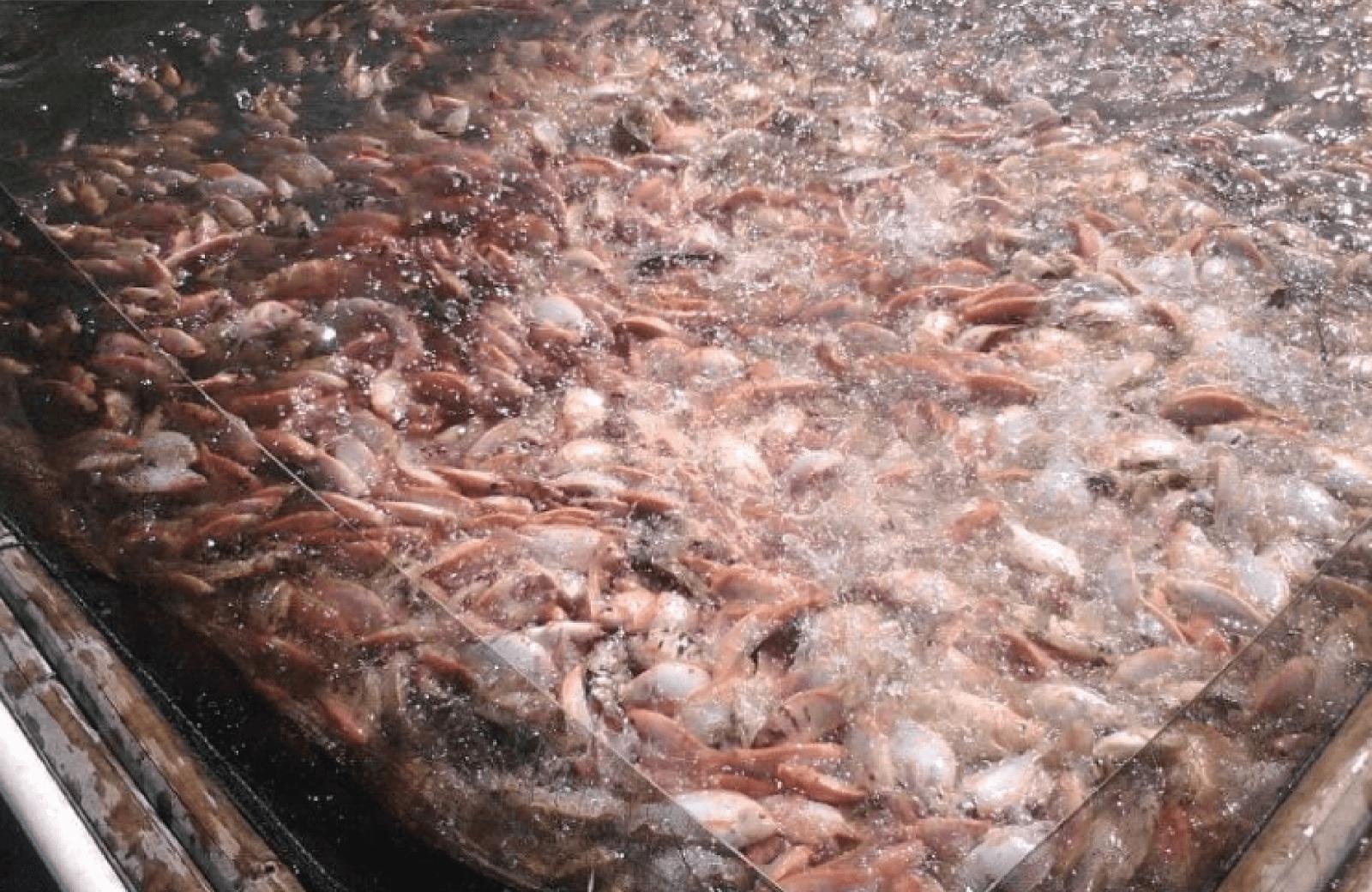 Keuntungan per Bulan Budidaya Ikan Nila