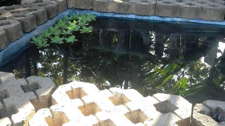 Tentukan Jenis Kolam Budidaya Ikan Gurame