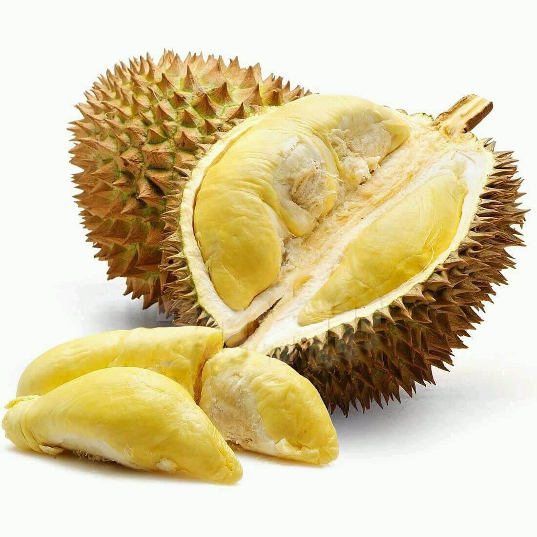 Manfaat Budidaya Durian