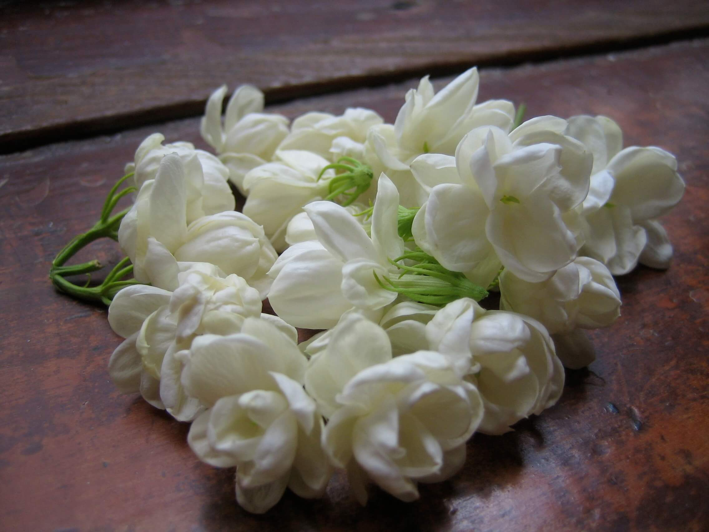 Manfaat Bunga Melati