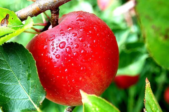 Peralatan yang Harus Disiapkan Dalam Menanam Apel