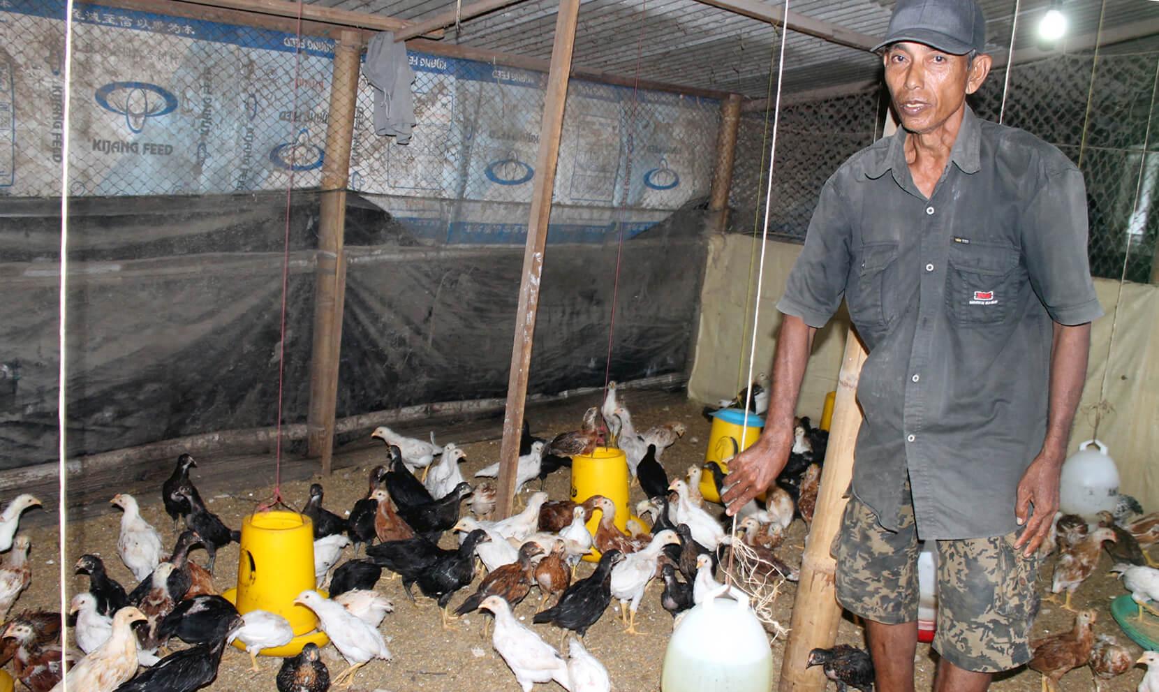 Menyiapkan Kandang Budidaya Ayam Joper
