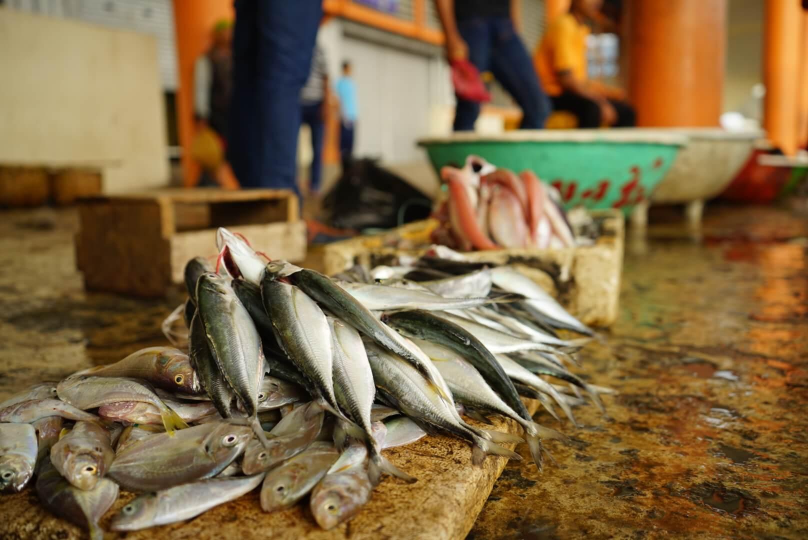 Mudah Melakukan Pemasaran Ikan Konsumsi