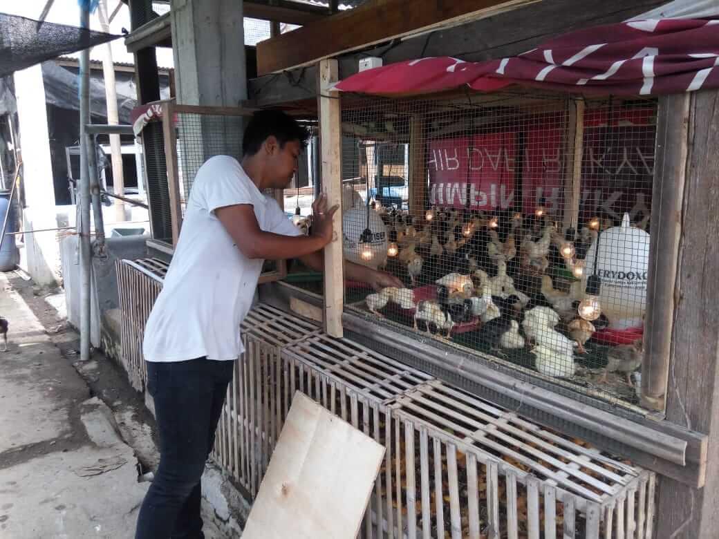 Perhatikan Penempatan Kandang Ayam Joper
