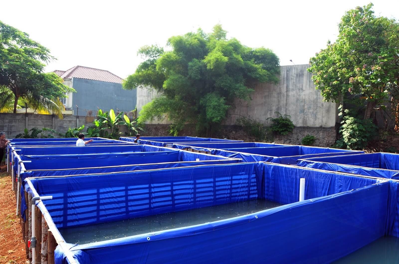 Pengisian Air dan Penyiapan Kolam Terpal Ikan Patin
