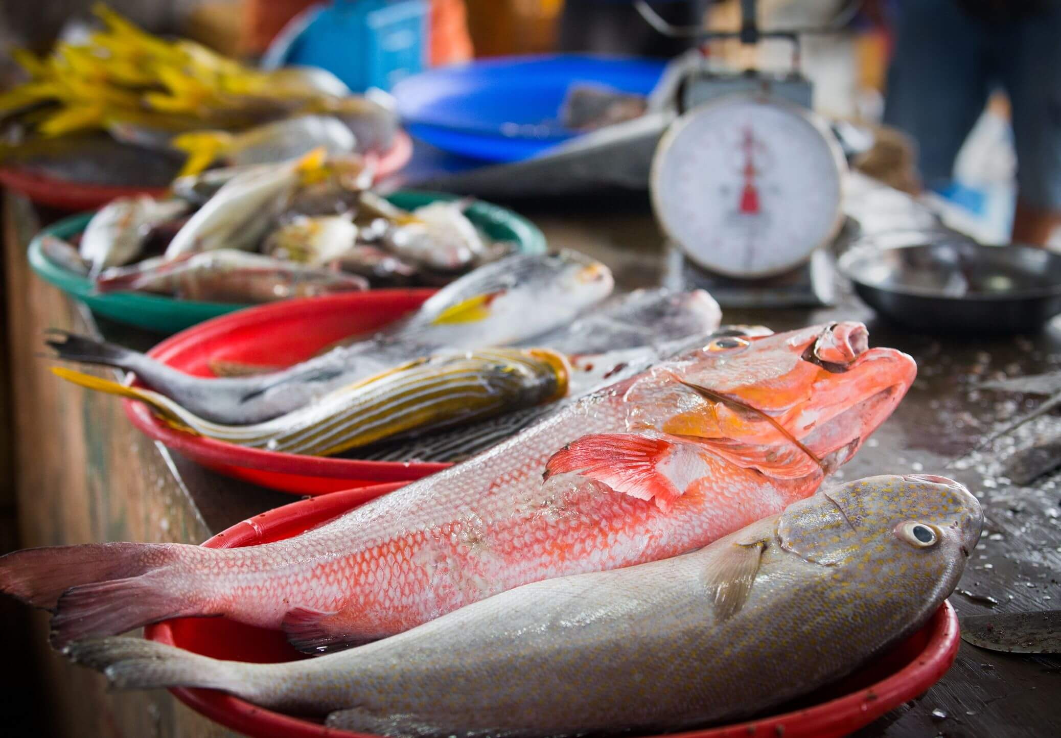 Permintaan Ikan Konsumsi Selalu Meningkat