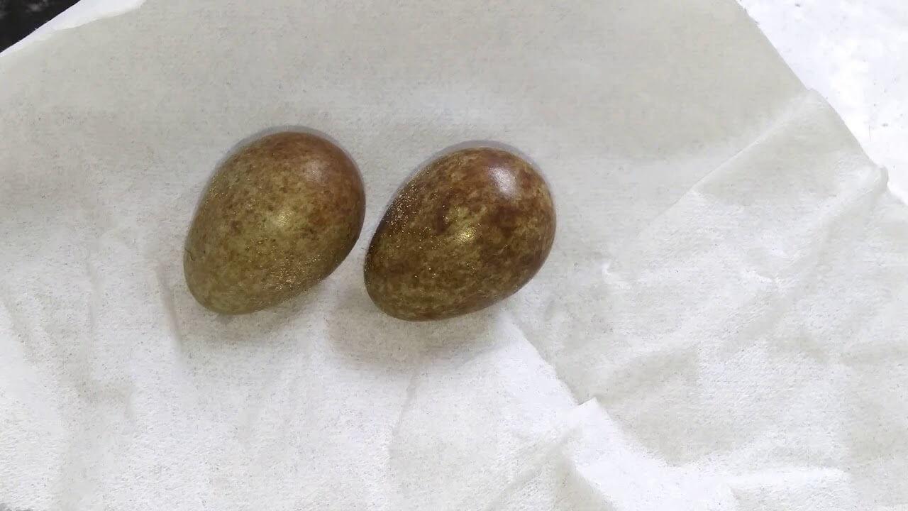 Mengetahui Penyebab Telur Murai Batu Medan Tidak Menetas