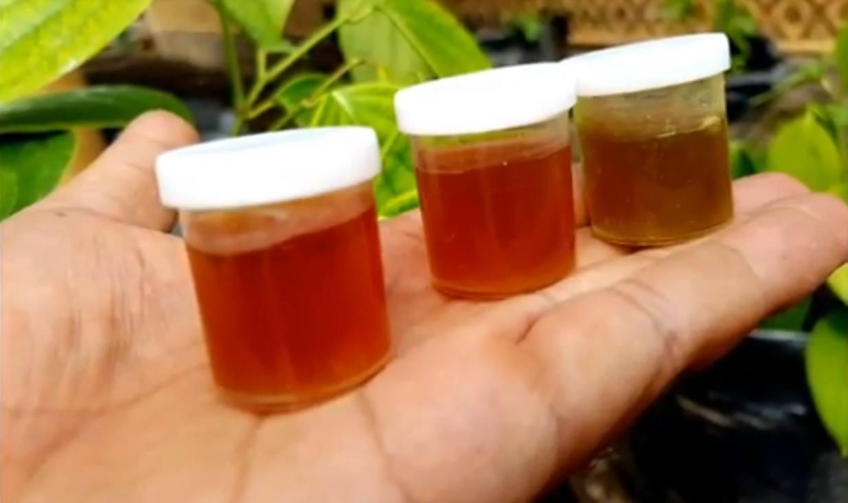 Cara Membuat Fungisida Alami Paling Mudah