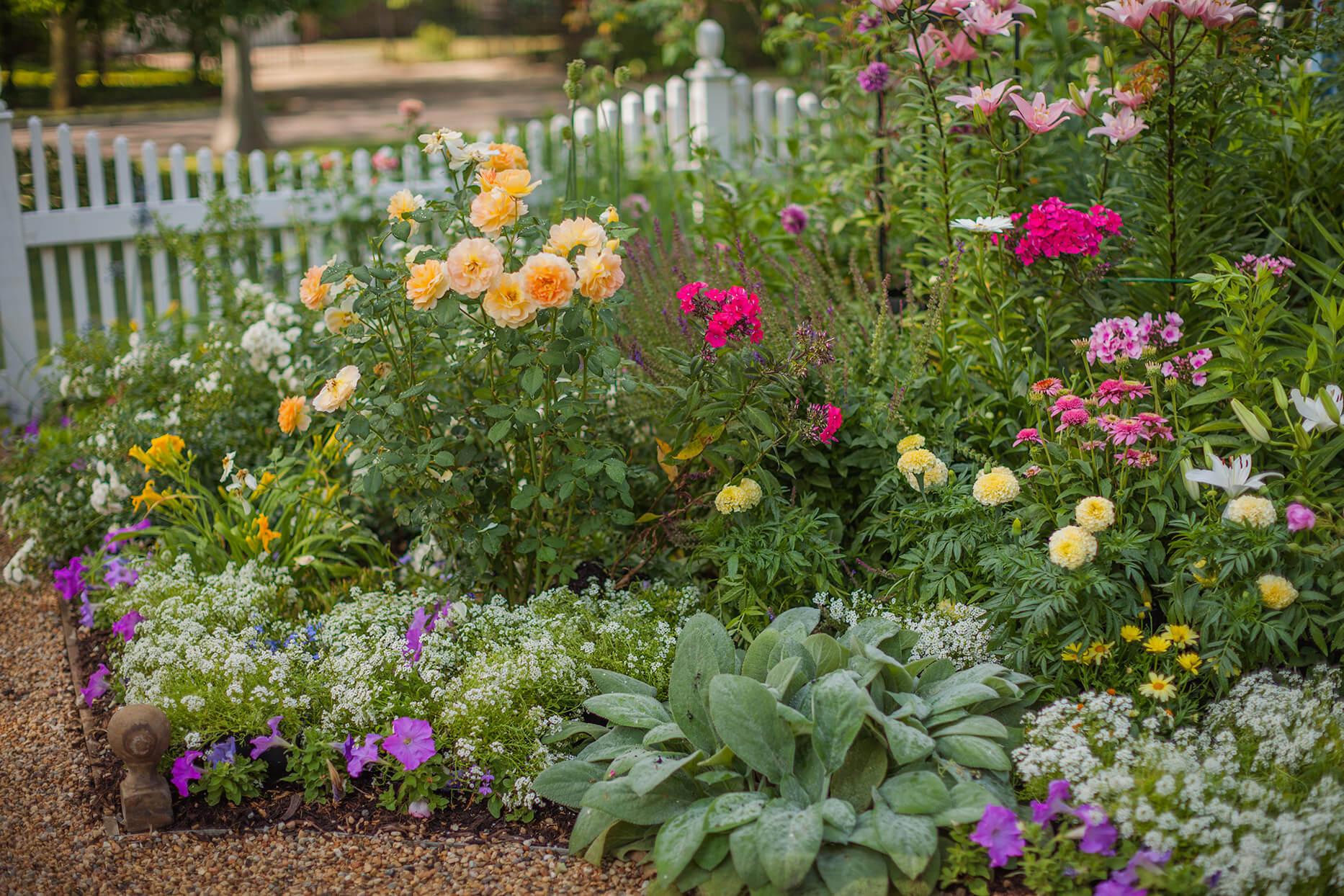 7 Cara Merawat Bunga Di Halaman Rumah Yang Baik Dan Benar
