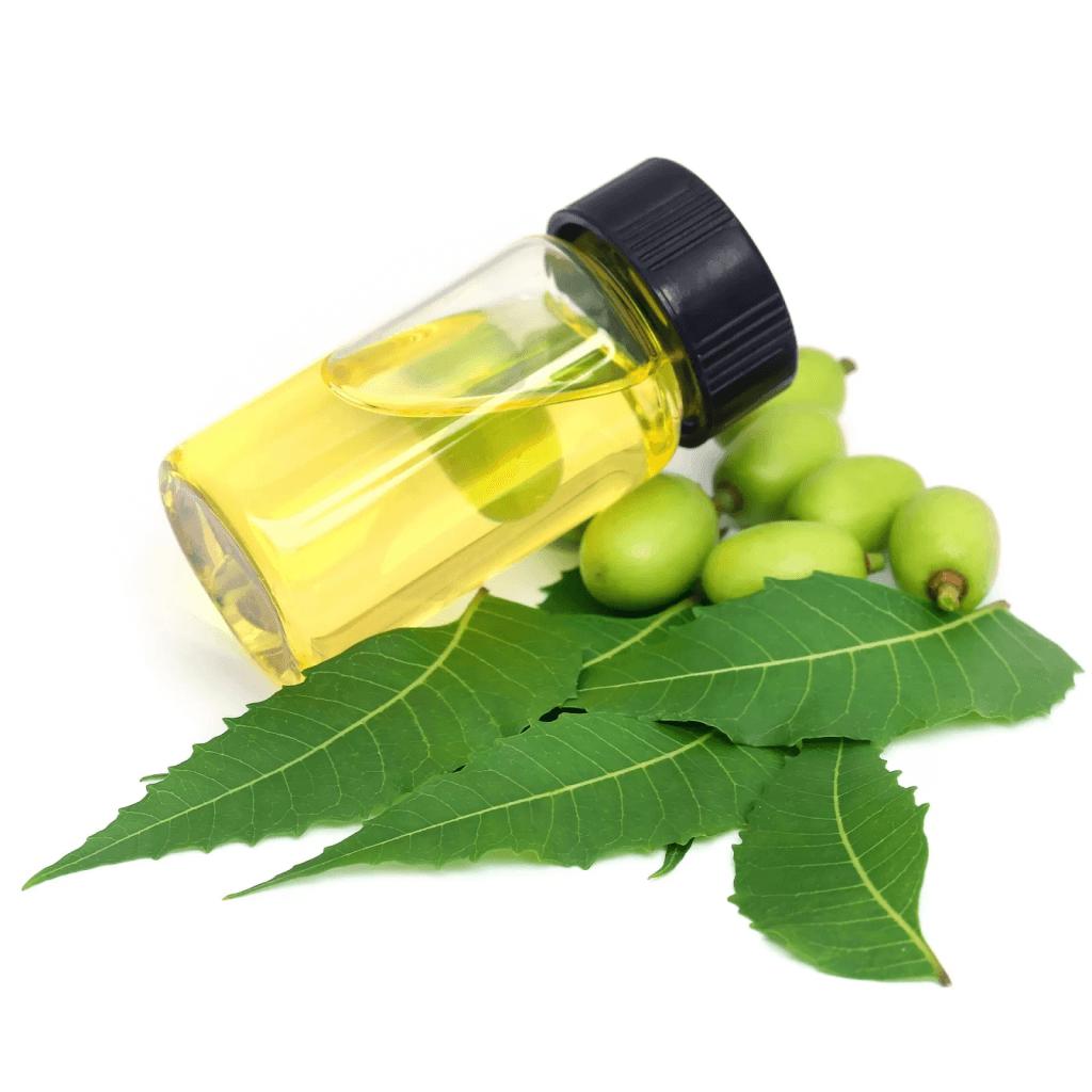 Fungisida Alami dari Neem Oil