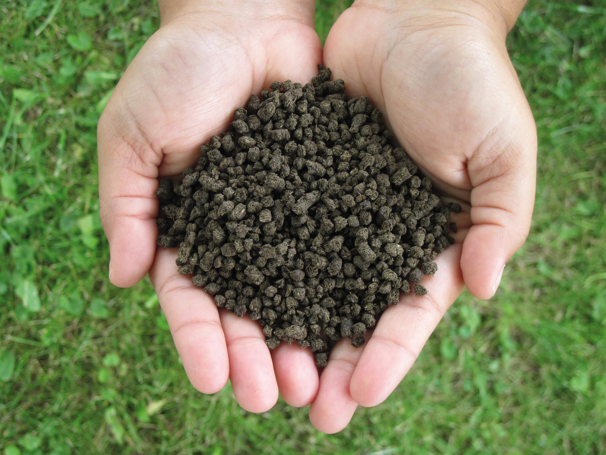 jenis pupuk kandang untuk tanaman mangga