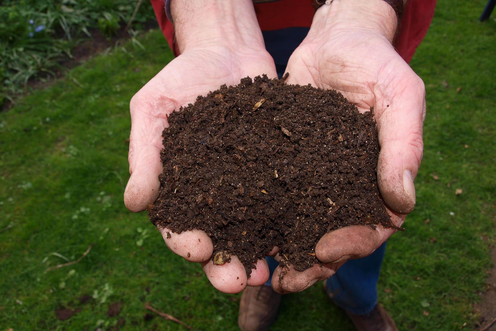 jenis pupuk kompos untuk tumbuhan mangga