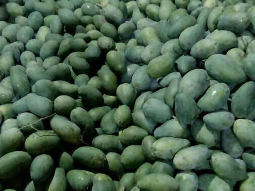 Produksi Mangga dalam Negeri